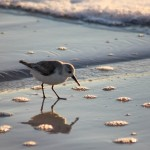 Baby Seagull Wallpaper