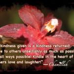 Kindness Wallpaper